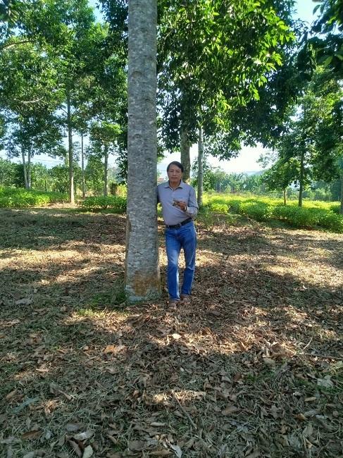 Trồng loại cây rừng cho hạt đỏ au, lão nông thu về hàng tỷ đồng mỗi vụ