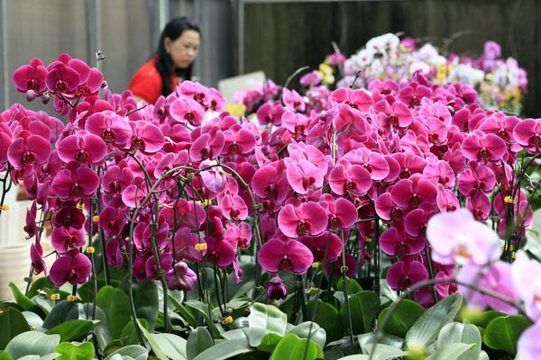 Một vườn lan 'siêu to khổng lồ' trên cao nguyên Di Linh mỗi năm doanh thu 20 tỷ đồng