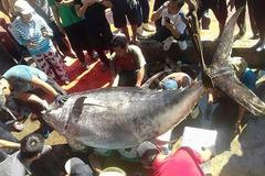 Vietnam's tuna exports soar as EVFTA tariff cuts take effect