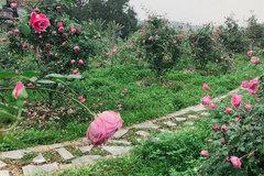 From teacher to rose farmer