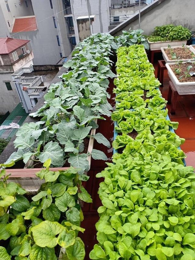 Ông bố đảm Hà Nội vác 2 tấn đất lên sân thượng trồng rau sạch cho vợ con