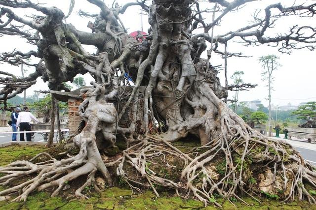 Đã mắt với vẻ kỳ quái, hầm hố của 'siêu cây', trả bao nhiêu cũng không bán