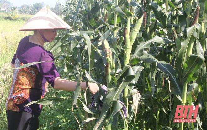 Từ 'trời Tây' về quê, vợ chồng Việt kiều bỏ tiền tỷ làm... nông dân chính hiệu