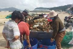 Tai họa lịch sử: 10 nghìn ha mất trắng, hàng ngàn tấn tôm cá chết