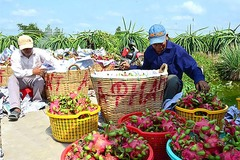 RCEP feared to pave the way for Chinese goods to flood Vietnamese market