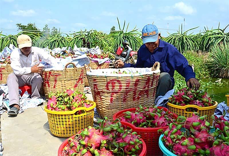 RCEP,FTA,China,chinese goods