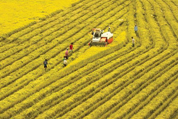Nông nghiệp, nông dân, nông thôn có vị trí chiến lược