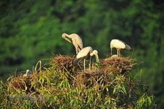 Thung Nham Bird Park – a site for bird lovers