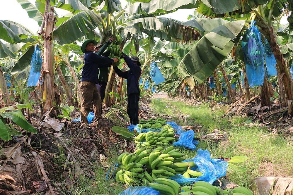 An Giang: Đổi mới mạnh mẽ mô hình tăng trưởng trong nông nghiệp để bứt phá