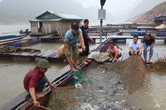 Tỷ phú nông dân thuần hóa loài 'thủy quái' ở thượng nguồn sông Đà