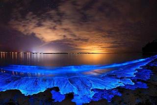 Tảo phát quang khiến bãi biển rực sáng vào ban đêm