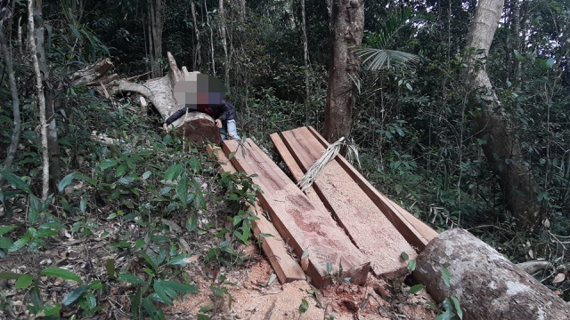 Deforestation continues in Central Highlands province