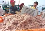 ADB raises Vietnamese GDP growth forecast to 2.3% this year