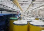 Nguy cơ thiếu hụt nguồn linh phụ kiện phục vụ sản xuất do dịch Covid-19