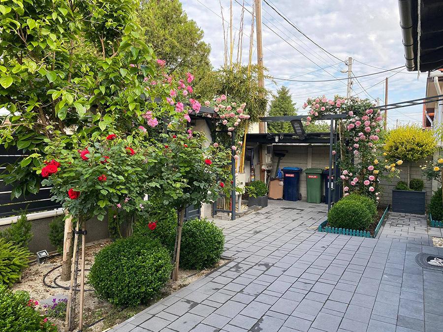 Vườn hồng hàng trăm mét, hoa nở rực rỡ của vợ chồng Việt ở trời Âu