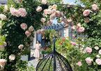 Vườn hồng dài hàng trăm mét, hoa nở rực rỡ của cặp vợ chồng người Việt ở châu Âu