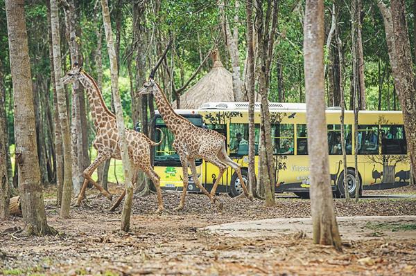 Kỳ nghỉ 'sang-xịn-mịn' dưới 6 triệu đồng dành cho 2 người ở Vinpearl Phú Quốc