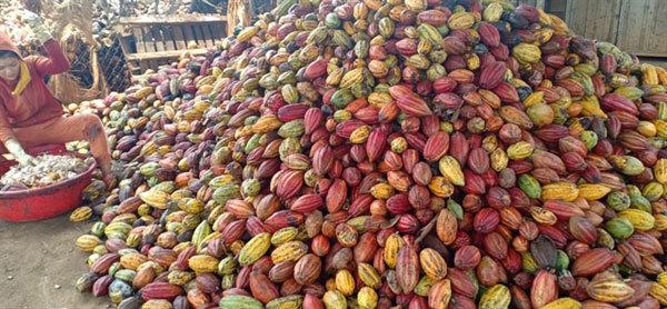 Vietnam needs focus on quality cocoa: experts