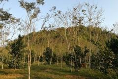 'Kho báu' nghìn tỷ dưới thung lũng của lão nông Tuyên Quang bây giờ ra sao?