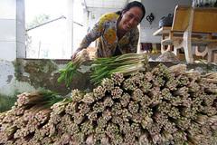 Thứ rau đồng hoang trước vứt đi không xuể, nay nhặt về trồng dưới mương, hái được bó nào lái khuân hết sạch