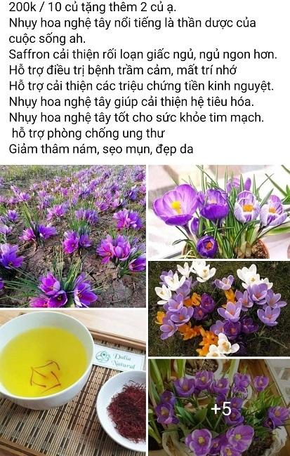 Củ giống của loại 'vàng đỏ' đắt nhất thế giới được bán rẻ ở Việt Nam gây sốc