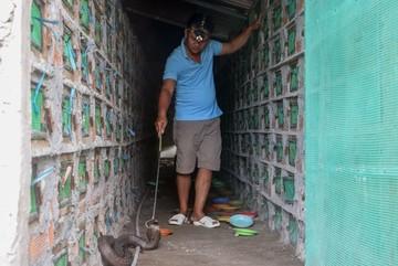 Suốt 5 năm ăn ngủ canh 'ổ' rắn hổ mang hơn hai nghìn con ở miền Tây
