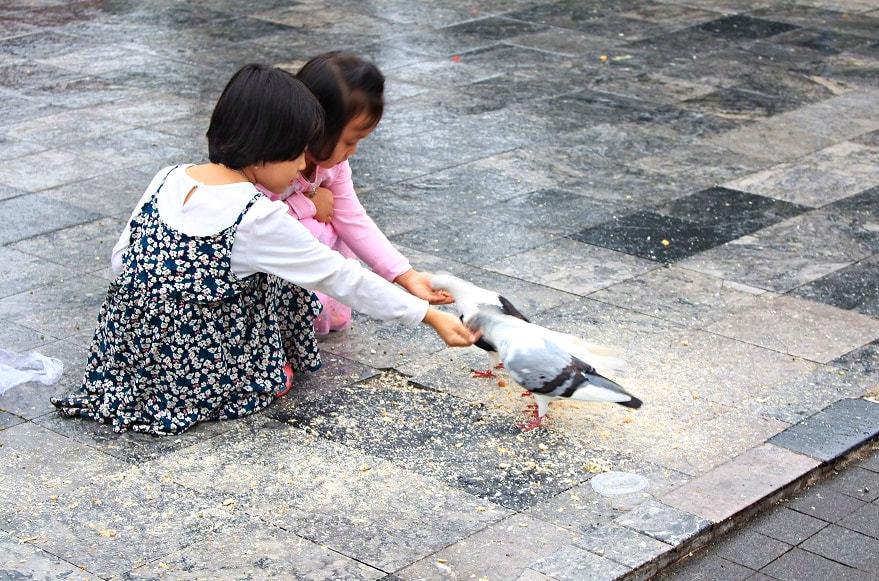Người dân Sài Gòn đội mưa, đưa con đến nhà thờ chơi cùng bồ câu