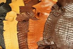 Chú trọng phát triển công nghệ thuộc da đà điều, da cá sấu thân thiện môi trường