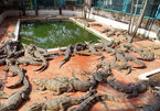 Thousands of wildlife farms in Vietnam threaten biodiversity