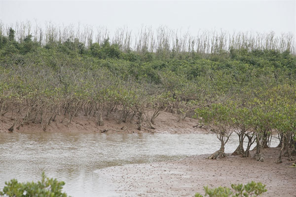 Protection of wetlands