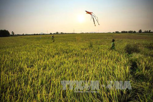 Water issues at the centre of Mekong Delta planning