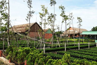 Farmstay experiences In Dong Thap