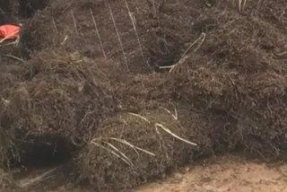 Bán loại 'cỏ khô' của Lạng Sơn thu về cả trăm tỷ?