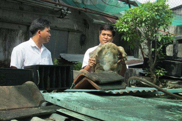 Ông nông dân nuôi trăm con cua đinh hình thù kỳ dị, nhiều con nặng 10kg, bán đắt tiền