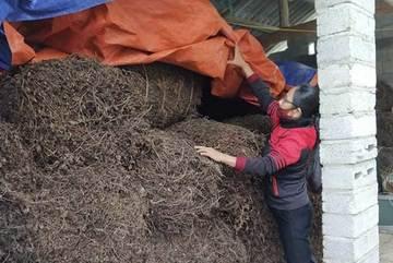 Đặc sản hàng trăm tỷ của Việt Nam sắp được xuất chính ngạch sang Trung Quốc