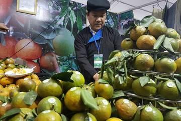 Hà Giang chuyển làm hàng chất lượng, đẩy mạnh chế biến sau quả cam