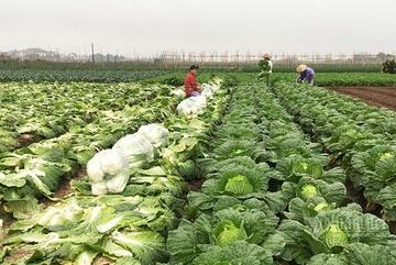 Trung Quốc thiếu hụt, cơ hội lớn cho nông sản Việt sang thị trường tỷ dân