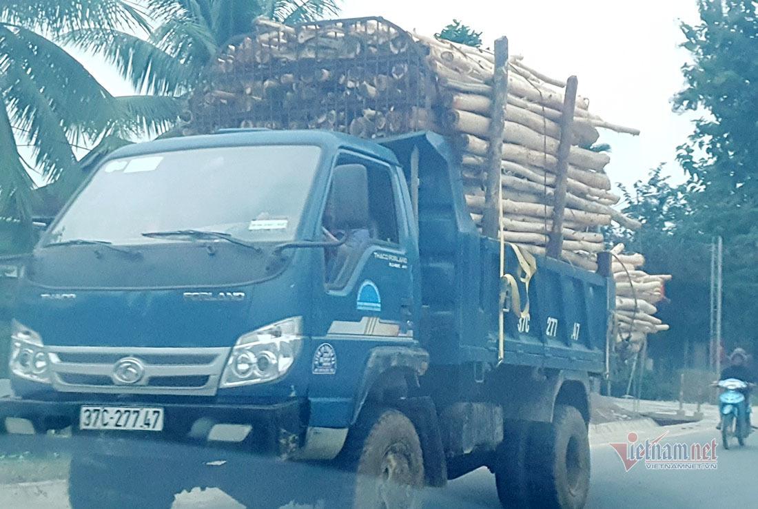Dàn xe cơi nới chở gỗ nghênh ngang trên cung đường miền Tây Nghệ An