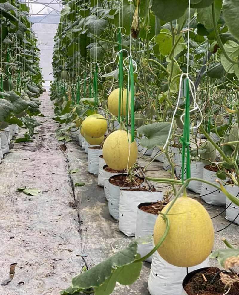 Bắc Giang 'mở lối' cho nông nghiệp công nghệ cao, nông dân hưởng lợi