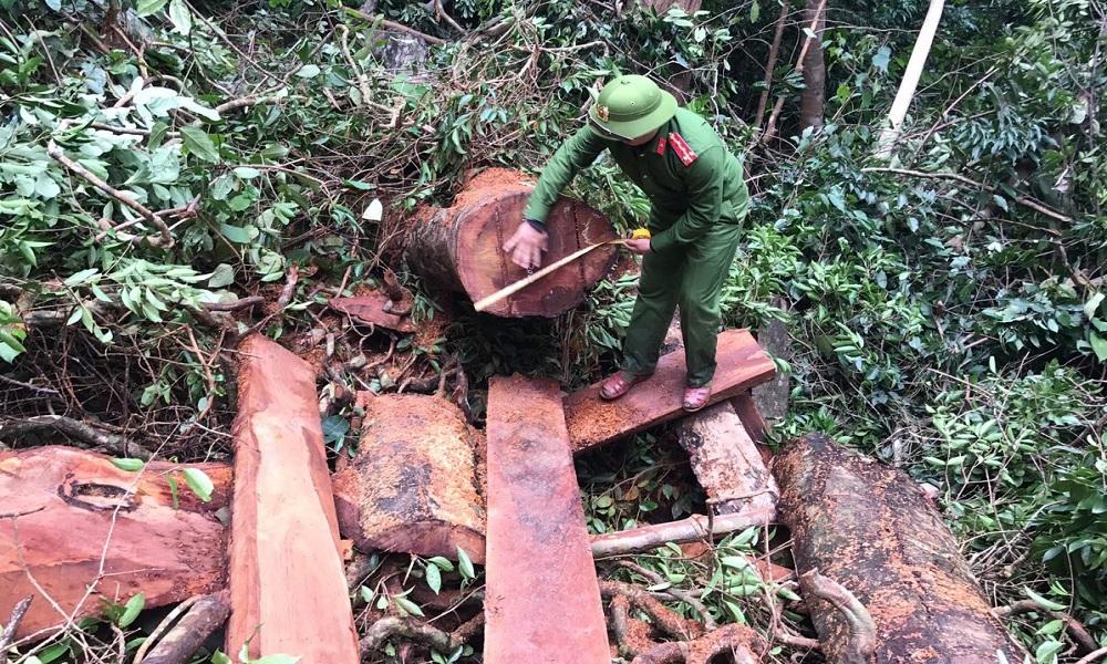 100 cảnh sát vây bắt nhóm phá rừng quy mô lớn ở Quảng Bình
