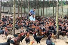 Tái cơ cấu nông nghiệp: Sau 5 năm Bắc Giang có những vùng quê ngàn tỷ