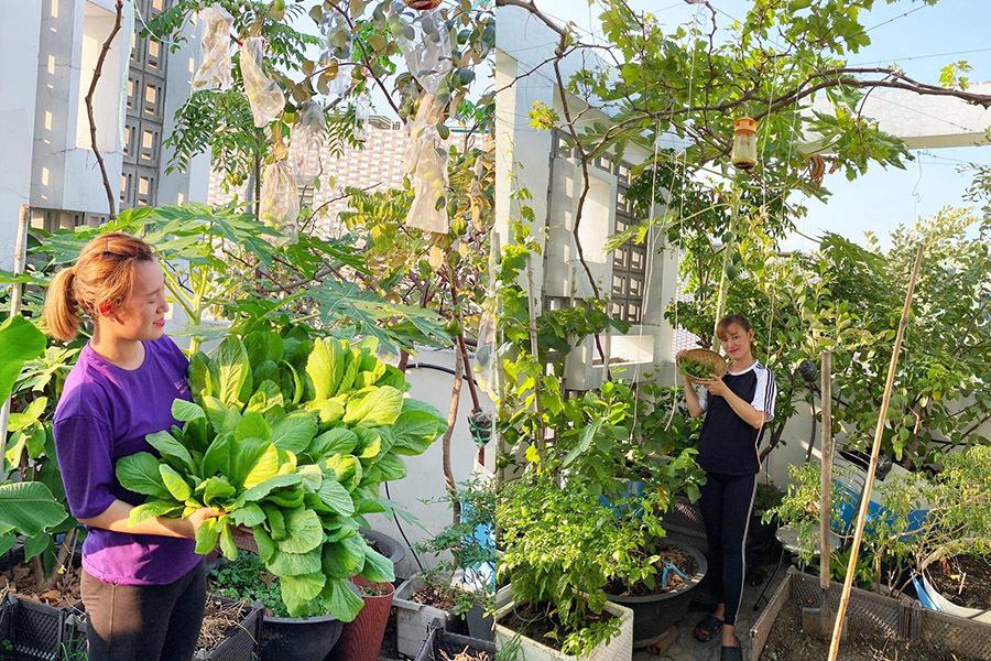 Khu vườn đủ cây trái trên sân thượng nhà cô giáo Sài Gòn