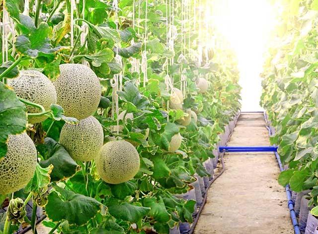 Nông nghiệp Thanh Hóa hướng tới sản xuất lớn, hiện đại