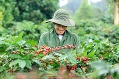 Cơ cấu lại nông nghiệp, xây dựng và phát triển thương hiệu các sản phẩm chủ lực quốc gia, phát triển nông sản theo 3 trục sản phẩm