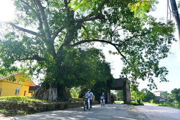 Exploring Duong Lam, a typical ancient village in northern Vietnam
