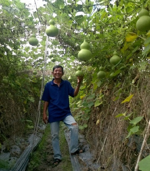 Lão nông sở hữu vườn bầu tiên 'độc nhất vô nhị', có quả lên tới cả triệu đồng