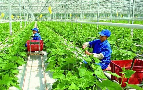 HTX mê làm nông nghiệp 4.0, thích sản xuất theo chuỗi