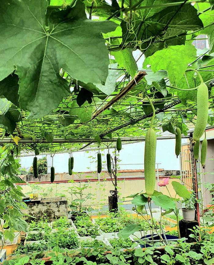 Vườn rau, ao cá trên sân thượng của vợ chồng Sài Gòn