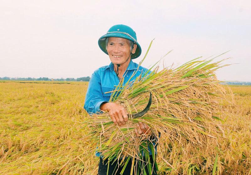 Việt Nam một năm thắng đậm, vượt Thái Lan soán ngôi số 1 thế giới