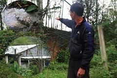 Trại heo hơn 1.000 con ngày đêm 'tra tấn' người dân ở Đà Nẵng